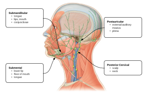 Cervical cancer  Wikipedia